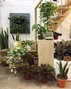 #plantstore @verdeplantshop
