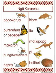 20 illustrated common amimals, insects and bugs. Labels are in Maori Primary Teaching, Teaching Tools, Teaching Resources, Family Tree Worksheet, Hawaiian Tribal, Hawaiian Tattoo, Maori Words, Maori Symbols, Maori Patterns