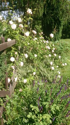 Rustical garden: wooden fence, climbing roses and herbst. Designed by Joanna Paszko Ochotny Homestyling