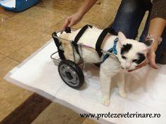 Proteze si Carucioare Veterinare   Galerie Imagini Baby Strollers, Children, Dogs, Animals, Baby Prams, Young Children, Boys, Animales, Animaux