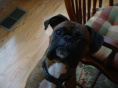 baby boxers - Google Search