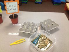 Scribbles and DIBELS: Pre-K lessons on seeds and plants