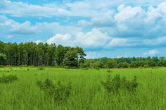 Blue skies and lush green grass at the Purley Gates Ranch - 131 Purley Gates, Winnsboro, Texas
