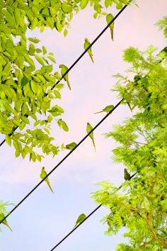 水谷吉法|Yoshinori Mizutani. インコが東京の空をライムに染める これは合成なんかじゃない