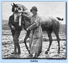 Sahiba  (Nana Sahib I x Donka), grey dam of Amurath Sahib 1932, was foaled in 1924 at Breniow Stud in the Lwow province of Poland.