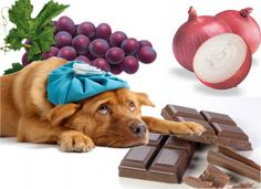 http://www.oola.com/lifestyle/13017/ 15-foods-you-may-not-know-could-kill-your-dog?org=t#slide/015 Foods You May Not Know Could Kill Your Dog