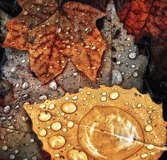 Autumn Rain [can you paint rain drops?