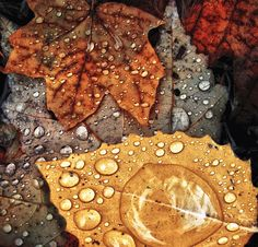 Love the raindrops on the leaf. Also how close the leaf is in the front of the picture. And the many shades of brown.