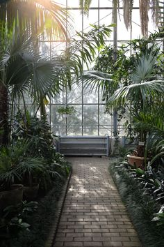You Need Gardening Insurance For Anyone Who Is A Managing A Gardening Organization The Elysian Edit Cluj-Napoca City Guide With Lavinia Cernu. Tropical Patio, Jungle Vibes, Visit Romania, Green Zone, Exotic Plants, Landscaping Plants, Back Gardens, Flower Beds, Botanical Gardens
