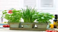 Dicas Sobre Jardinagem - Dicas Online