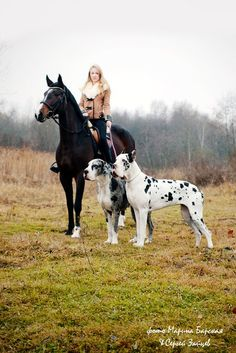 Amazing. Great Danes don't look like this in the US. Anyone know what bloodline these 2 goliaths are from?