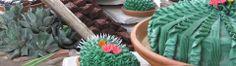 Cactus Cakes: Signature Menu Items - Don Strange of Texas Inc.