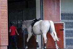 Jazda konna | Stajnia dla koni - Bobrowy Staw - Stajnia http://BobrowyStaw.pl