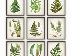 Fern Antique Botanical Print Set of 6 - Vintage Botanical Home Decor Antique Book Plate Illustration Giclee Picture Set of 6 (AB70)  Printed using high quality archival inks on heavy-weight archival paper with a smooth matte finish. A fantastic gift or a fabulous addition to your home!  Please choose between different sizes.  ---------------------------------------------------------------------------------------------  For more botanical and animal prints please visit:  http://www.e...