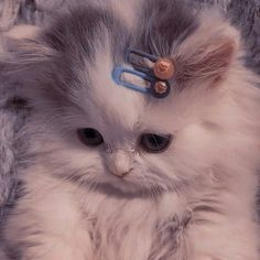 Funny Cute Cats, Cute Baby Cats, Cute Little Animals, Cute Cats And Kittens, Cute Funny Animals, Kittens Cutest, Funny Cat Wallpaper, Cute Cartoon Wallpapers, Cat Icon