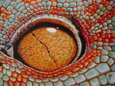Oil on canvas Photo copyright of Dominic Heard. Used with permission. Eye Pictures, Silly Pictures, Crocodile Eyes, Reptile Eye, Regard Animal, Eye Close Up, Nature Plants, Monster Art, Animal Faces