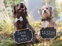 Dogs with chalkboard save the date signs and cute bow ties.