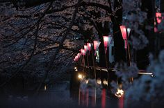 http://www.flickr.com/photos/miamiamia/124709006/in/set-72057594099585949/  #lamps #trees #light
