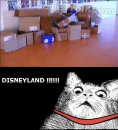 """* * """" All dem boxes of dead tourists! Disneyland beez one bigs mouse trap fer peoples."""""""