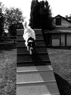 Silver A-frame and she did hit her contact:) Border Collie Mix, Dog Agility, Pup, Frame, Dogs, Silver, Picture Frame, Dog Baby, Pet Dogs