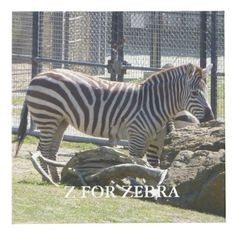 Z For Zebra Cube Photo Cubes, Images And Words, Cleaning Wipes, Prints, Color, Colour, Colors