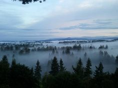 Blanket of fog - almost looks like it was taken from mom and dads house.