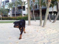 A sandy day!
