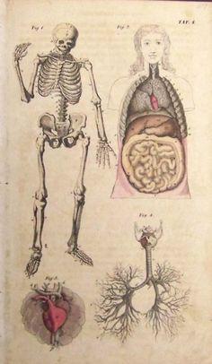 Grabado de anatomía de 1837