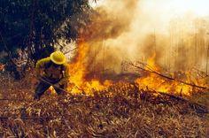El municipio contará con los servicios que ofrece la brigada contra incendios forestales 728, informa el director de ecología, Juan Gabriel Juárez – Pátzcuaro, Michoacán, 06 de marzo de 2016.-Para ...