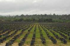 "Andrew Britton: Let's not be blinkered about palm oil ""Stakeholders will need to work together to make sustainable palm oil production the norm, rather than the preserve of a relatively small proportion of the global market."""