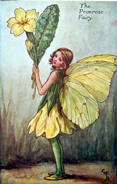 March House Books Blog: Primroses and Flower Fairies