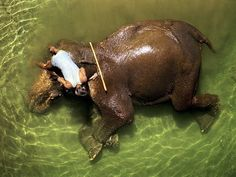 Mahmout Bathing an Elephant, India: Photo by Mohit Midha for National Geographic.