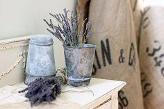 French Larkspur: lavender