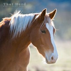 Daily Blog | That Herd | Horses Being Horses | Page 8