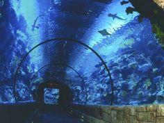 Shark Exhibit Tunnel