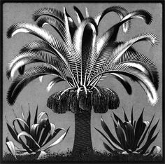 """M. C. Escher- """"Palm""""- February 1933, Wood engraving in black and grey-green, printed from two blocks."""