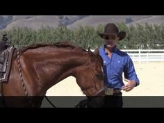 The difference between a hackamore and a rope halter ( or sidepull ) - YouTube