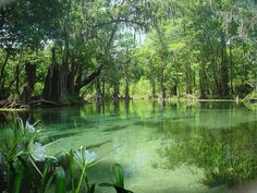 Ichetucknee Springs Florida
