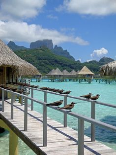 The welcoming committee in Bora Bora, French Polynesia (by krmall).
