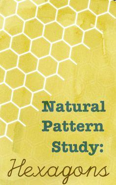 natural patterns - hexagons beanandbee.com