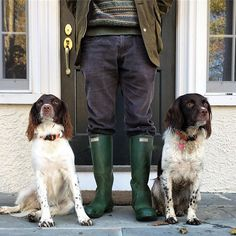 along_came_folly Wellies ✔️; Somebody's got all the right accessories! Welsh Springer Spaniel, Field Spaniel, Spaniels, Barbour, Dog Days, Puppy Love, Cottage, Puppies, Dogs