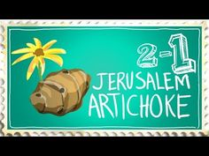 dca1ce3bec83 How to Grow Jerusalem Artichoke