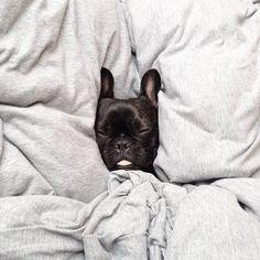 comfy//