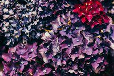 Violet Flower by Hombre-cz on Creative Market
