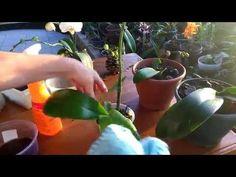Trocando vaso da sua orquídea - YouTube