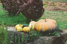 A new post on my Blog!! :) An autumn day: mosta del mercato per l'orto 2014