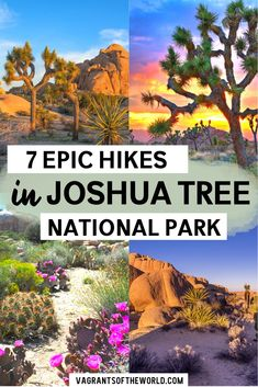 Looking for the best hikes in Joshua Tree National Park? Here are some of the most epic hikes for first time visitors. Find tons of tips on visiting Joshua Tree National Park in California California National Parks, National Parks Usa, California Travel, California Honeymoon, Southern California, Hiking Places, Hiking Trails, Joshua Tree Hikes, Best Hikes