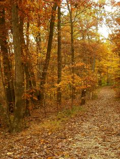 Autumn Path Photo Nature Photography Fall by AnEclectiCollection, $30.00