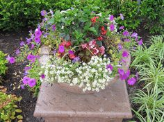 Summer Container Gardening traditional landscape