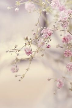 artemisdreaming:    Above: Flower Tree - Lady-Tori HERE  .  Beauty doesn't need ornaments. Softness can't bear the weight of ornaments.  .  ~Munshi Premchand